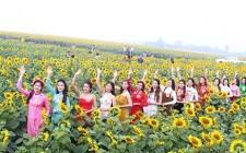 15 người đẹp khoe dáng trên cánh đồng hoa hướng dương