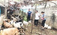 Nuôi dê - Hướng đi ổn định trong chăn nuôi