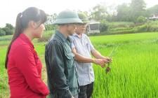 Nghĩa Đàn chủ động phòng trừ rầy hại lúa