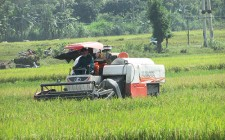 Nghĩa Đàn nông dân chạy đua thu hoạch gần 200 ha lúa mùa