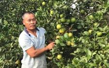 Tập huấn Quy chế quản lý và sử dụng chỉ dẫn địa lý Cam Vinh