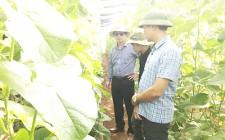 Đồng chí chủ tịch huyện tham quan mô hình trồng thử nghiệm dưa lưới ở xã Nghĩa An