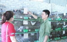 Thanh niên 9X làm giàu nhờ nuôi chim bồ câu