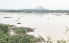 Hơn 20 ha ngô ở bãi bồi chìm trong biển nước