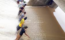 Người dân đổ xô đi bắt cá sau bão