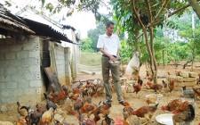 Nghĩa Tân tập huấn kỹ thuật chăn nuôi gà an toàn sinh học