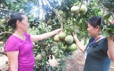 Nông dân Nghĩa Đàn đa dạng hóa cây trồng vật nuôi