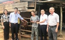 Trao bò gống sinh sản và hỗ trợ tiền làm nhà cho hộ nghèo