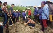 Hỗ trợ giống khoai lang thương phẩm cho 40 hộ gia đình có hoàn cảnh khó khăn