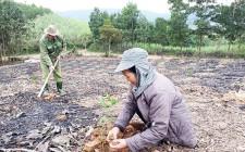 Trồng và chăm sóc rừng đầu vụ Xuân năm 2019