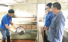 Thanh niên Nghĩa Đàn khởi nghiệp từ mô hình nuôi lươn không bùn