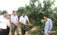 Hội Nông dân Nghĩa Đàn tham quan học tập mô hình trồng cây có múi