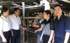 Trao bò gống sinh sản cho hộ nghèo