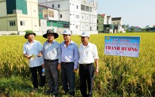 Tham quan học tập mô hình trồng lúa mới tại Diễn Châu và Yên Thành