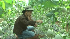 MO RONG MO HINH DUA LUOI NGHIA AN