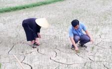 Nghĩa Đàn nhiều địa phương đối mặt với khó khăn do thiếu nước