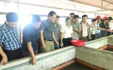 Hội nông dân huyện Nghĩa Đàn tham quan mô hình nuôi lươn không bùn