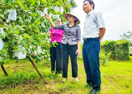 Đồng chí Hoàng Thị Thu Trang kiểm tra các công trình ách yếu, thăm mô hình cam tại xã Nghĩa Liên