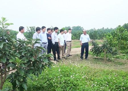 Hội thảo Ứng dụng tiến bộ khoa học, công nghệ nhân giống và trồng thử nghiệm cây bơ trên địa bàn Nghĩa Đàn