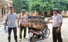 Cấp gà giống cho các hộ nghèo xã Nghĩa Hưng