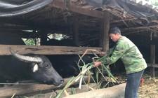 Nghĩa Đàn phát huy hiệu quả nguồn vốn hỗ trợ nông dân