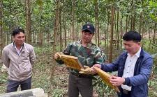 Nông dân Nghĩa Đàn làm giàu từ nuôi ong rừng lấy mật