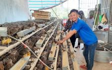 Thanh niên nghèo xã Nghĩa Thành vượt khó phát triển kinh tế