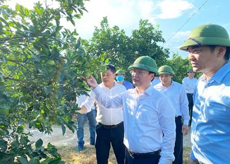 Đồng chí Nguyễn Đức Trung chủ tịch UBND tỉnh thăm các mô hình kinh tế tại Nghĩa Đàn