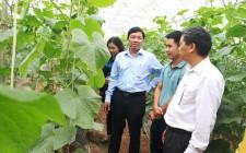 Ban Dân vận Tỉnh ủy thăm mô hình kinh tế tại Nghĩa Đàn