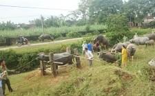 Nghĩa Đàn triển khai tiêm phòng vụ Thu cho vật nuôi