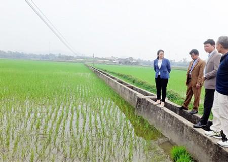 Bí thư Huyện ủy kiểm tra tình hình sản xuất vụ Xuân tại Nghĩa Lộc và Nghĩa Khánh