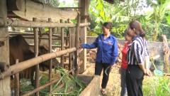 Phụ nữ Nghĩa Đàn xóa nghèo bền vững cho hội viên