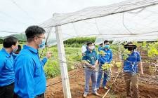 Phó bí thư Tỉnh đoàn thăm quan thực tế mô hình phát triển kinh tế của đoàn viên, thanh niên huyện Nghĩa Đàn