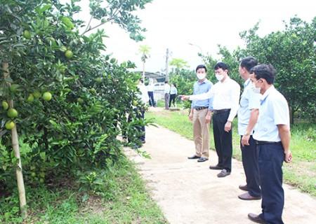 Tham quan mô hình trồng cây ăn quả tại Hợp tác xã NN cây ăn quả 1/5